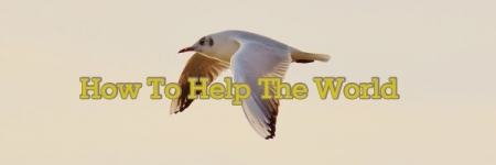 how_to_help_the_world